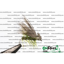 SciFlies Elk Hair Caddis Olive 14 3Pack