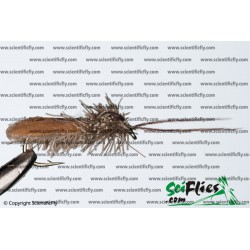 SciFlies Cinnamon Caddis Cinnamon 12 3Pack