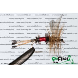 SciFlies Royal Coachman Standard 14 3Pack